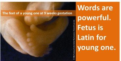 "feet of 9-week-old human fetus (aka ""young one"" in Latin)"