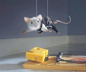 mouse being lowered onto cheese to avoid trap